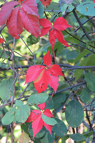 early-fall-colors-4