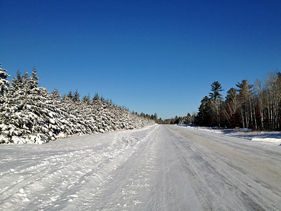 winter-pines-along-road