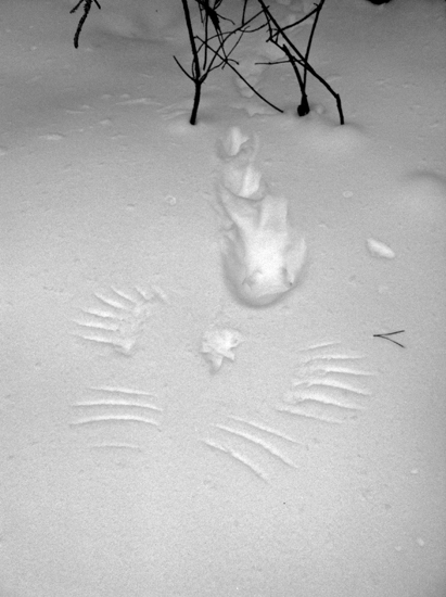 grouse-snow-tracks
