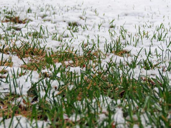 snowy-spring-2